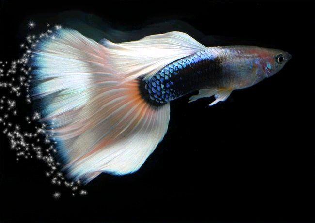 Aqua magik for Nourriture combattant